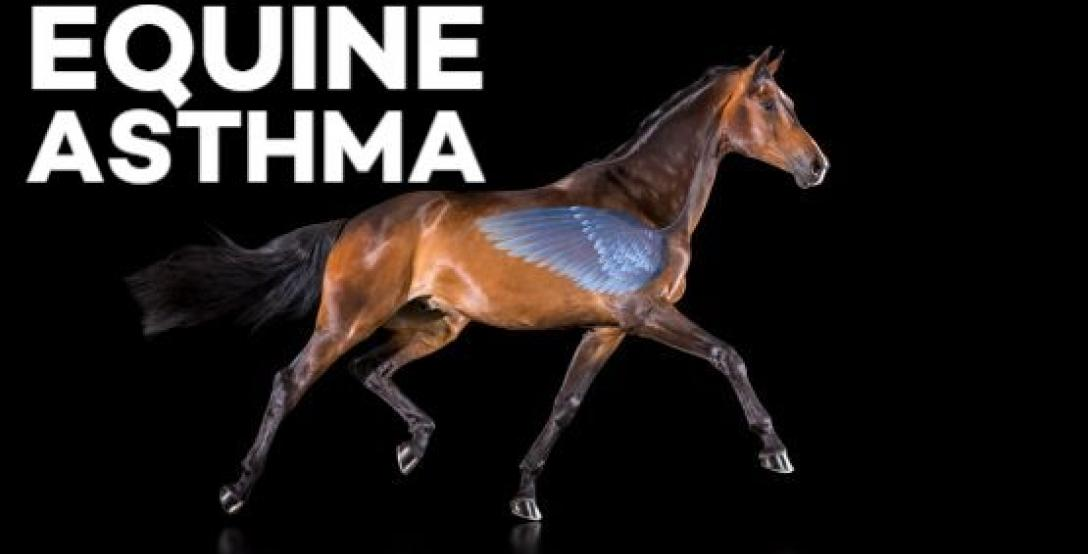 Webinar-on-Equine-asthma-with-Scott-Pirie